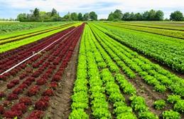 zéolite naturelle - agriculture - cultures végétales